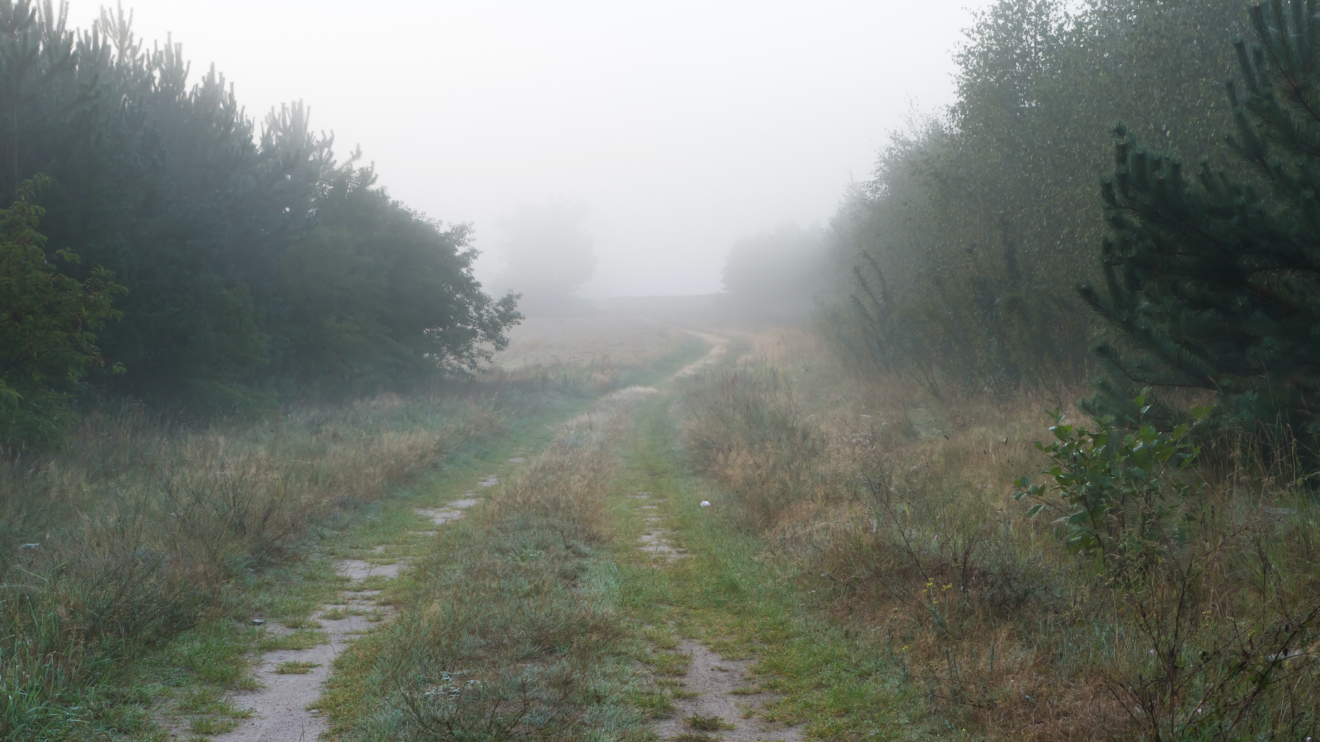 misty path that is not clear