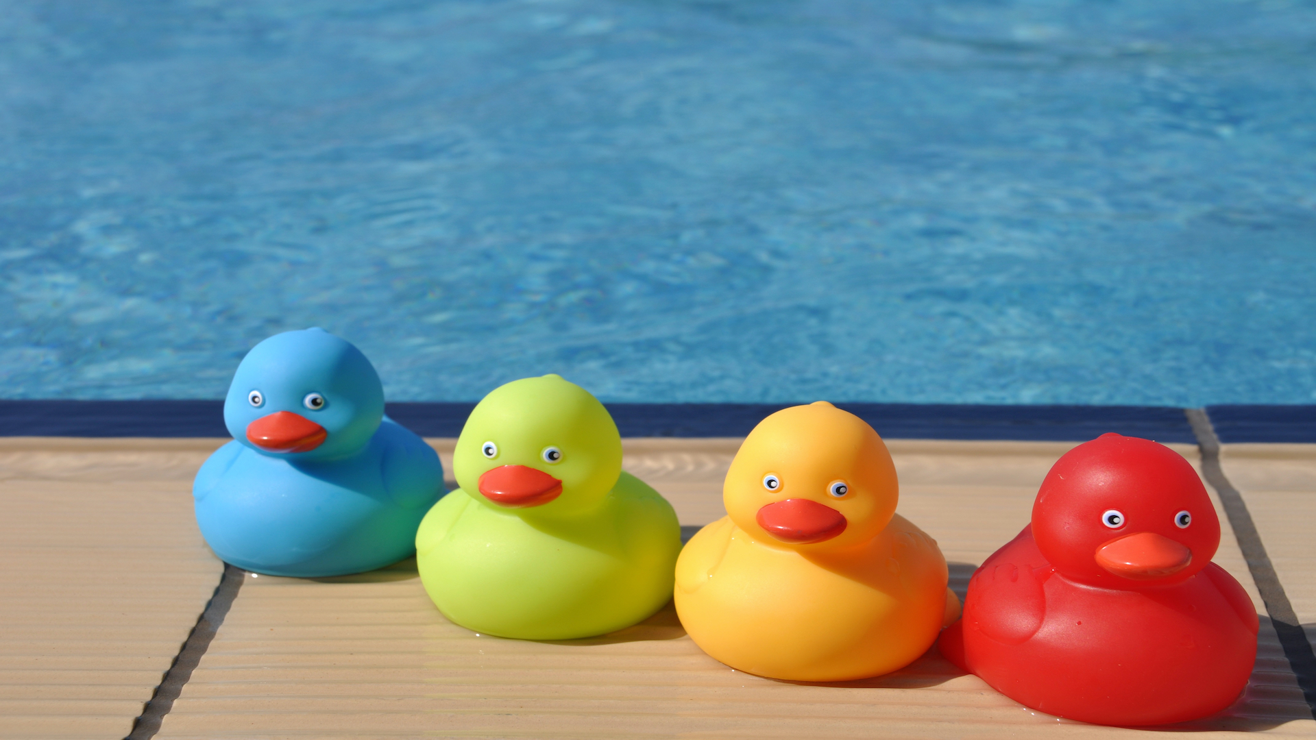 Picture of rubber ducks