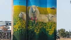 picture of sheep on wheat silos